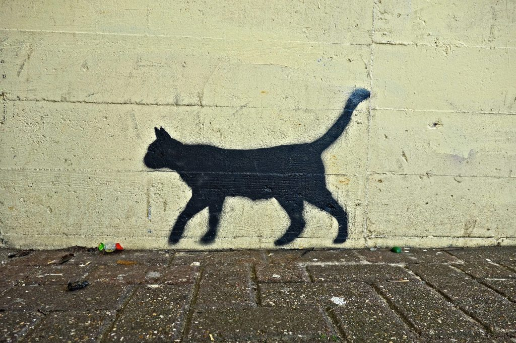 In Polen glaubt man, dass eine schwarze Katze Unglück bringen kann